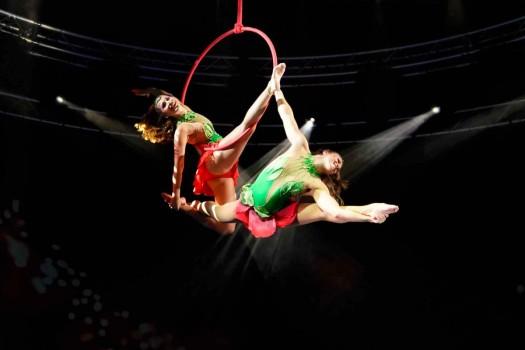 Le Cirque WTP - NUOVO ALIS